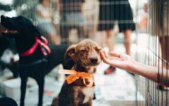 Increase in Animal Adoptions During Quarantine